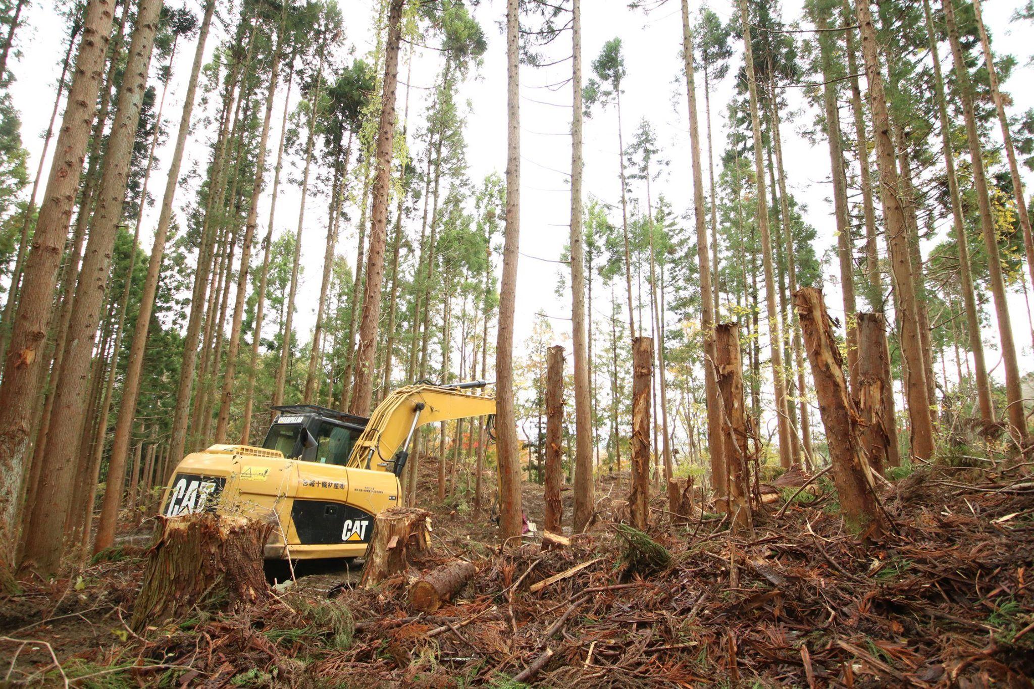 七つ森バスツアー 〜この森の木で家を建てる〜